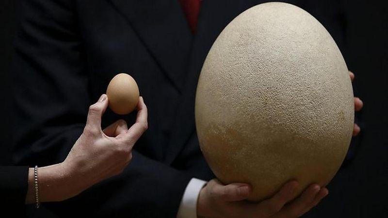 Giant-egg